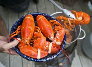 Three Reasons Lobsters are Expensive